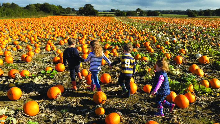 Pick your own pumpkin - children having fun image